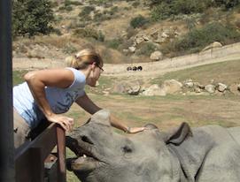 P&G Rhino