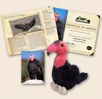Special Adoption: California Condors